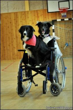 emil tova rullstol