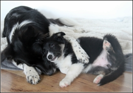 hundmys 2