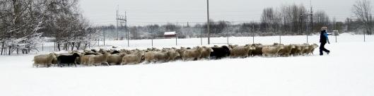 många får