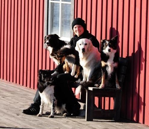 norrköpings hunddagis