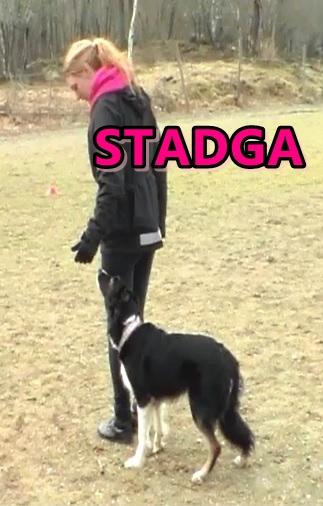 stadga