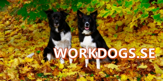 workdogs