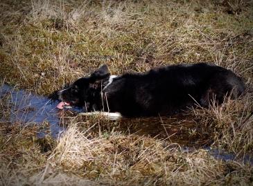 kite dricker vatten