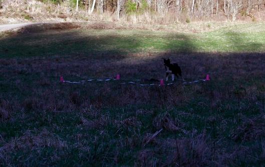 Kite rutan hundträning