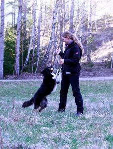 louise kite busar hundblogg