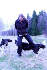 slalom hund