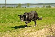 gamelhund 2