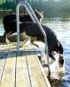 hund klättrar stege vatten bad bc