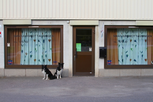 AniCura Finspång Veterinär Smådjursmottagning