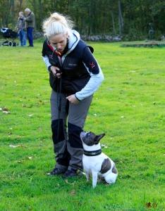 angelica oskar fransk bulldog rallylydnad