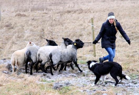 fixa louise fåren