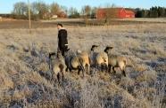 louise fåren