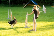 louise kite agility