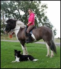 tova häst