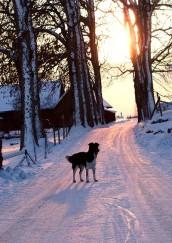 tova solnedgång
